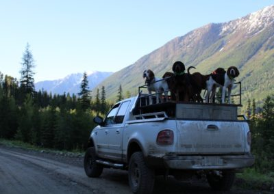 black bear (8)_guided hunting trips in british columbia