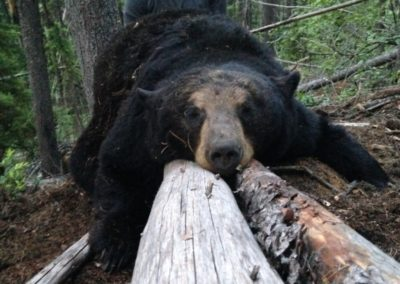 black bear_guided hunting trips in british columbia