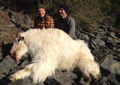 goat (6)_guided hunting trips in british columbia