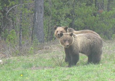 photo_164_grizzly-bear-guided-hunting-trips-in-british-columbia