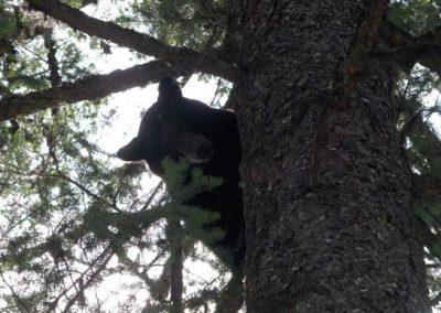 photo_319_black-bear-guided-hunting-trips-in-british-columbia