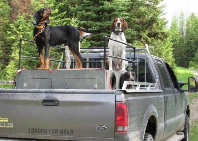 photo_408_black-bear-guided-hunting-trips-in-british-columbia